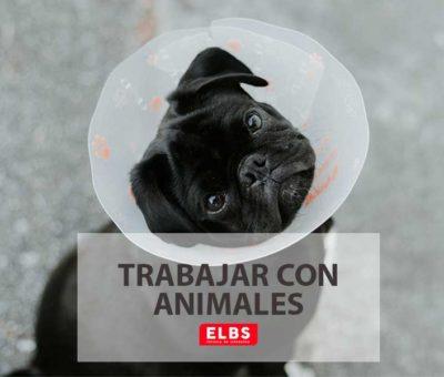 Guía de las titulaciones que te permitirán trabajar con animales, por Escuela ELBS